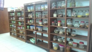 Gross Collection